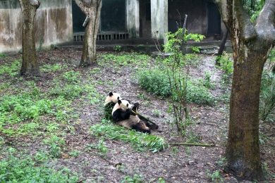 Chengdu Panda Break and Trek _2017_13