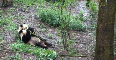Chengdu Panda Break and Trek _2017_14