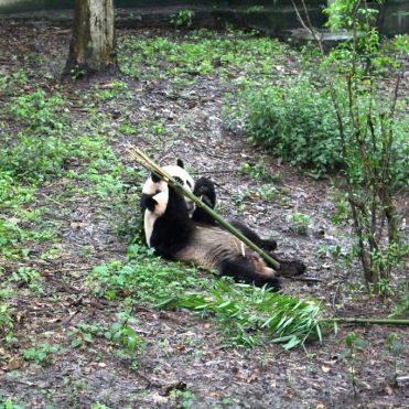 Chengdu Panda Break and Trek _2017_16