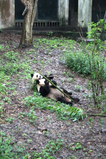 Chengdu Panda Break and Trek _2017_18