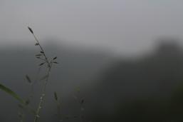 Nature Chine Break and Trek _2017_4