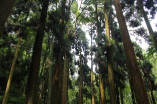 Qingcheng Break and Trek _2017_5