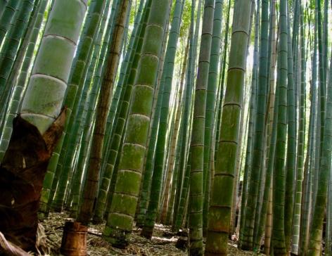 Bambouseraie Kyoto Japon Break and Trek 2017_4