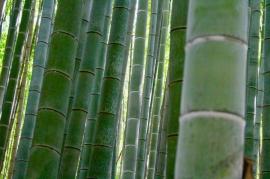 Bambouseraie Kyoto Japon Break and Trek 2017_5