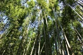 Bambouseraie Kyoto Japon Break and Trek 2017_7