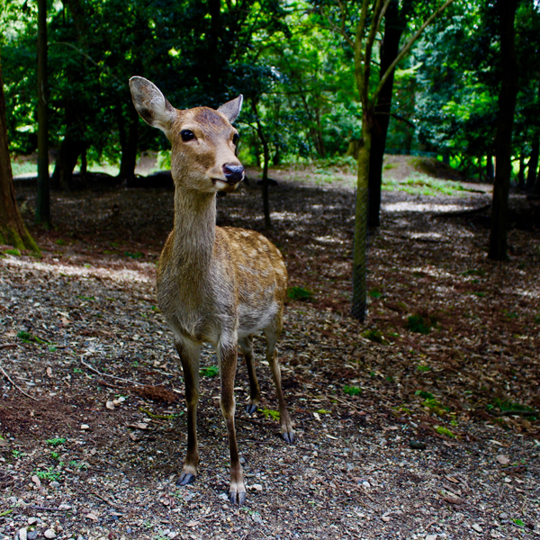 Nara Japon Break and Trek 2017_16