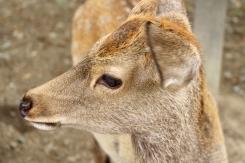 Nara Japon Break and Trek 2017_3