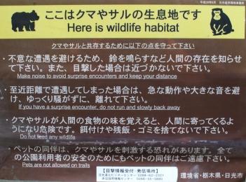 Trek Nikko Japon Break and Trek _2017_16