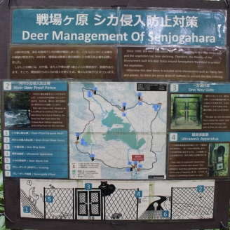 Trek Nikko Japon Break and Trek _2017_17