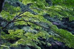Trek Nikko Japon Break and Trek _2017_24