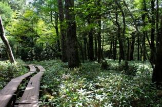 Trek Nikko Japon Break and Trek _2017_4
