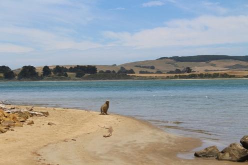Nouvelle Zelande © Break and Trek_2018_8