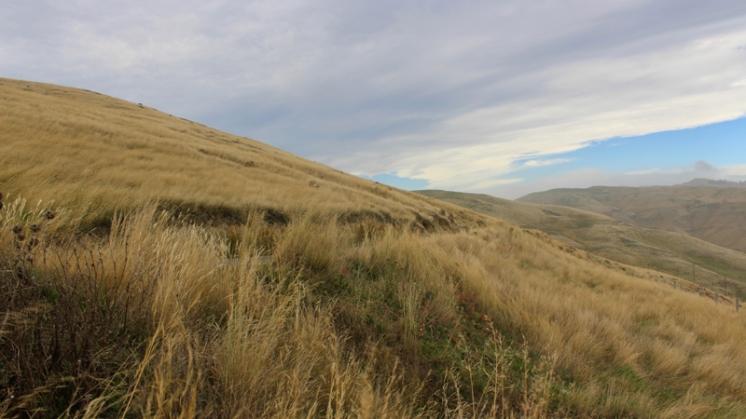 Péninsule de Christchurch - Godley Head Farm Park Reserve NZ © Break and Trek_2017_2