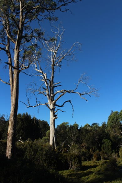 Cradle Mountain Tasmanie © Break and Trek_2018_5