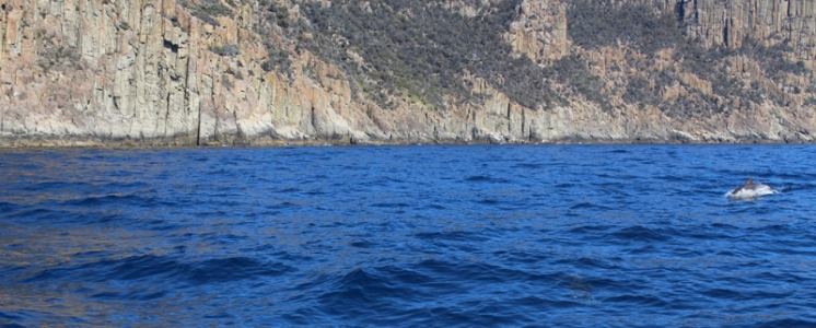 Croisière Tasman Island Tasmanie © Break and Trek_2018_14