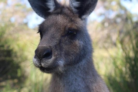 Freycinet & Sanctuaire Tasmanie © Break and Trek_2018_13
