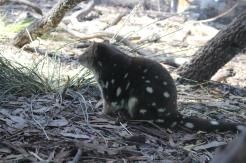 Freycinet & Sanctuaire Tasmanie © Break and Trek_2018_7