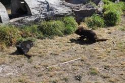 Freycinet & Sanctuaire Tasmanie © Break and Trek_2018_8