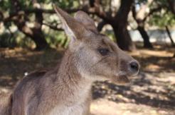 Freycinet & Sanctuaire Tasmanie © Break and Trek_2018_9