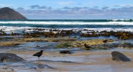 South Cap Tasmanie © Break and Trek_2018_10