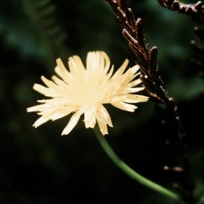 Flower © Break and Trek_2018_1117