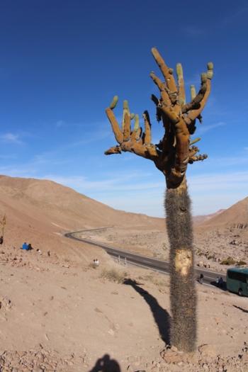 Arica © Break and Trek _ 2018 _ Chili 3