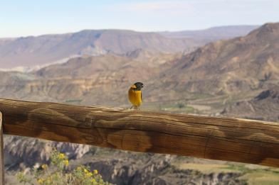 Arica © Break and Trek _ 2018 _ Chili 5