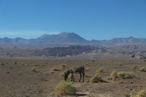 San Pedro de Atacama © Break and Trek _ 2018 _ Chili 16
