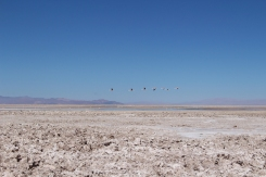 San Pedro de Atacama © Break and Trek _ 2018 _ Chili 18