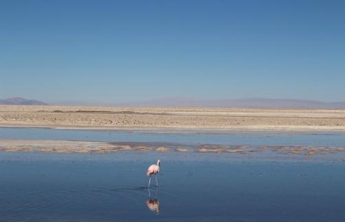 San Pedro de Atacama © Break and Trek _ 2018 _ Chili 21